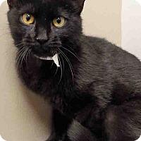 Adopt A Pet :: Sabrina - Channahon, IL