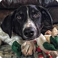 Adopt A Pet :: Marco - Okmulgee, OK