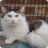 Adopt A Pet :: Jeffrey - Merrifield, VA
