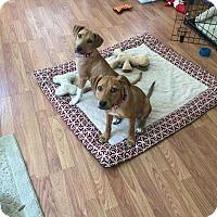 Adopt A Pet :: Emi - Grand Island, FL