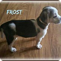 Adopt A Pet :: Frost - Doylestown, PA