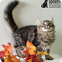Adopt A Pet :: MARBLE - Sandusky, OH