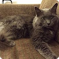 Adopt A Pet :: Melvin - Toronto, ON