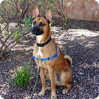 German Shepherd Dog Dog for adoption in Sedona, Arizona - Randy