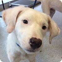 Adopt A Pet :: Donnie - DeForest, WI