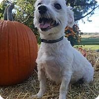 Adopt A Pet :: Ricco - Oakland, MI