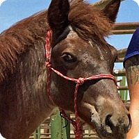 Mustang Mix for adoption in Lancaster, California - Cuervo