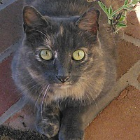 Adopt A Pet :: ScraperCP - Carlisle, PA
