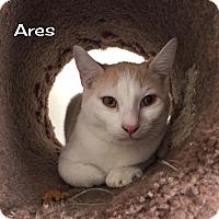 Adopt A Pet :: Ares - Rosamond, CA