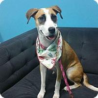 Adopt A Pet :: Jessie - Jacksonville Beach, FL
