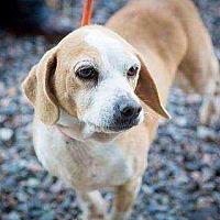 Adopt A Pet :: Beaufort - Summerville, SC