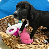 Adopt A Pet :: Darby - Decatur, AL
