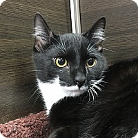 Adopt A Pet :: Bramwell - Wayne, NJ