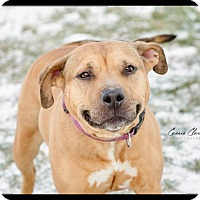 Adopt A Pet :: Eliza -Urgent! - Zanesville, OH