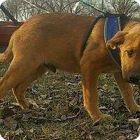 Adopt A Pet :: FRISCO - East Windsor, CT