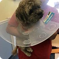 Adopt A Pet :: Roco - Jupiter, FL