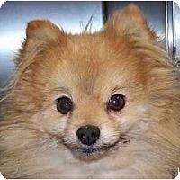 Adopt A Pet :: Dakota - Gum Spring, VA