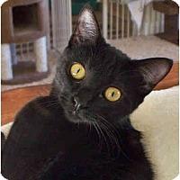 Adopt A Pet :: Mya - Palmdale, CA