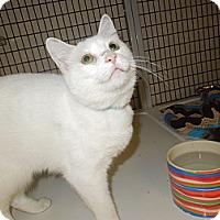 Adopt A Pet :: Tipper - Medina, OH