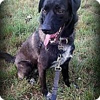 Adopt A Pet :: Leesi - Broomfield, CO