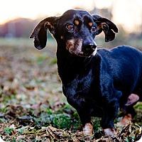 Adopt A Pet :: Jarid - Decatur, GA