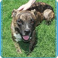 Adopt A Pet :: Slugger - Phoenix, AZ