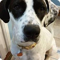 Adopt A Pet :: Lucy - Seahurst, WA