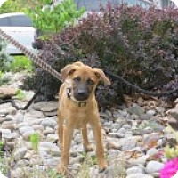 Adopt A Pet :: Luke - Middlesex, NJ