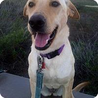Adopt A Pet :: Powder - San Diego, CA