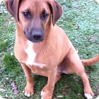 Adopt A Pet :: Harmony - Foster, RI