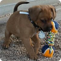 Adopt A Pet :: John - Scottsdale, AZ