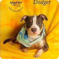Adopt A Pet :: Dodger - Topeka, KS