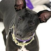 Adopt A Pet :: Trisha - Lansing, MI
