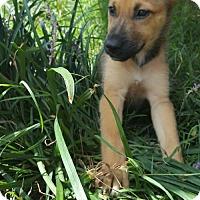 Adopt A Pet :: Jasmine - Morrisville, NC