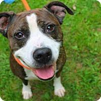 Adopt A Pet :: DUCKY - Scotia, NY