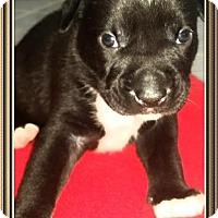 Adopt A Pet :: Male6 - Staunton, VA