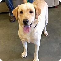 Adopt A Pet :: Charlie-URGENT - Seabrook, NH