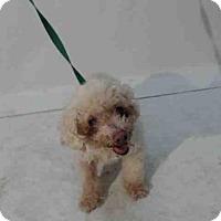 Adopt A Pet :: WHENDY - Orlando, FL