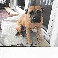 Adopt A Pet :: Indi - Chewelah, WA