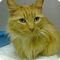 Adopt A Pet :: Ginger - Princeton, WV