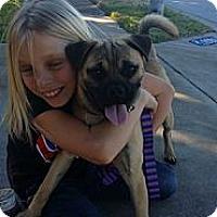 Adopt A Pet :: Dodge - Austin, TX