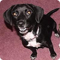Adopt A Pet :: Jessie - Huntsville, TN