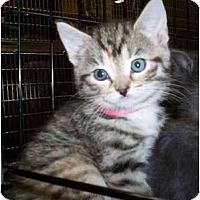 Adopt A Pet :: Buttercup - Reston, VA