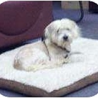 Adopt A Pet :: Buddy - Palmyra, WI