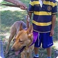 Adopt A Pet :: Oso - Los Alamitos, CA