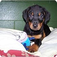 Adopt A Pet :: Margie - Antioch, IL