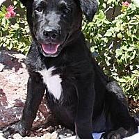 Adopt A Pet :: Tic-Tac-Toe - Gilbert, AZ