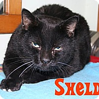 Adopt A Pet :: Sheldon - East Stroudsburg, PA