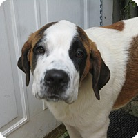 Adopt A Pet :: DINAH - ADOPTION PENDING - Sudbury, MA