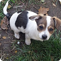 Adopt A Pet :: Brandy - San Dimas, CA